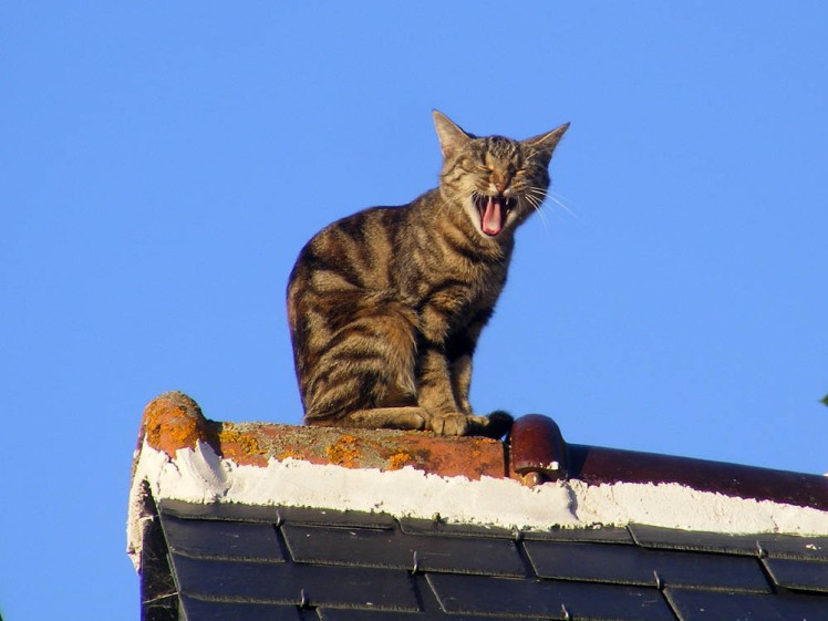 cat on the thin hot roof.jpg