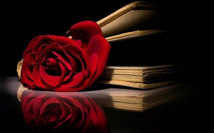 rose in a book 1