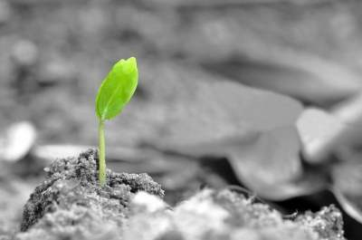 Germination-of-seed-
