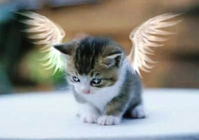 kitten_photo_angel_heaven_animal_pets