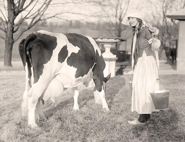 laptareasa