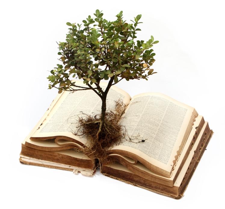 bible-plant