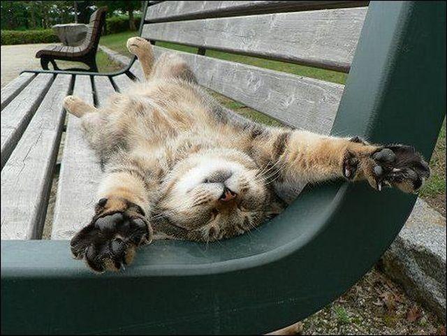 cat-bench