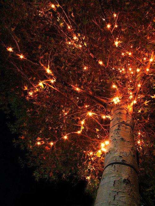 autumn-tree-lights