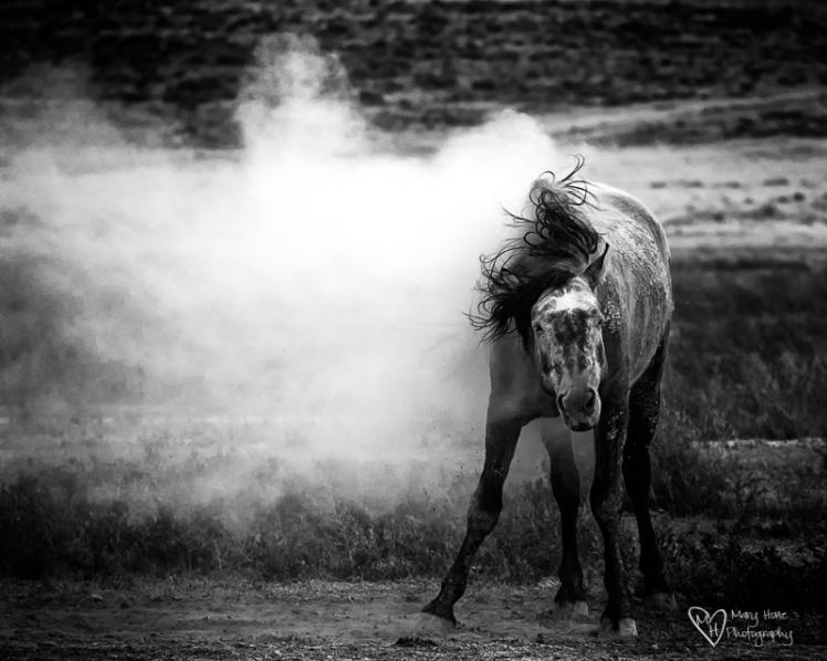 wild-horse-art-13