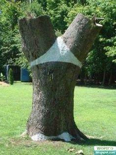 tree-ud-1
