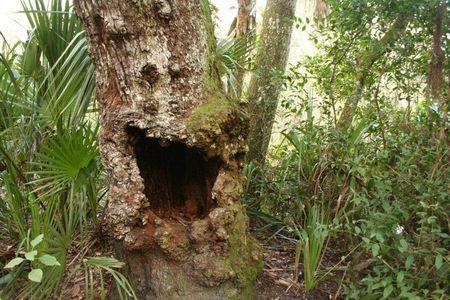 tree-ud-2