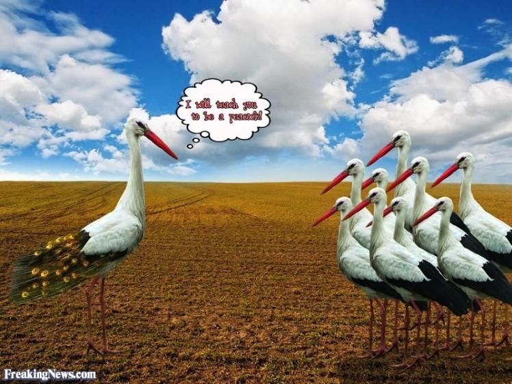 stork-teacher-79136