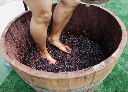 leg grapes