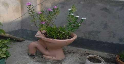 pamant-de-flori