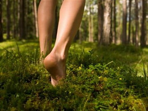 legs forest
